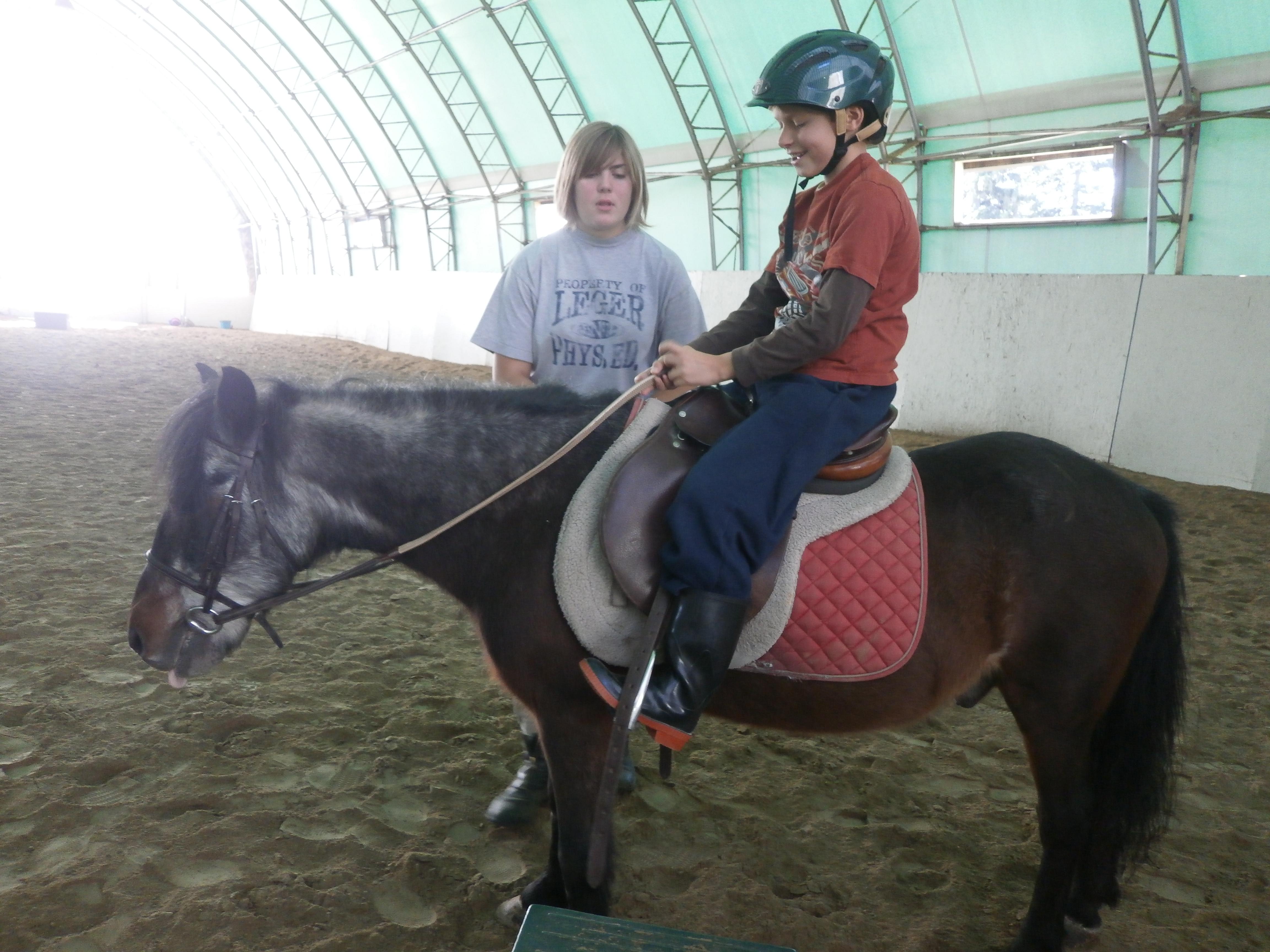 riding ponies