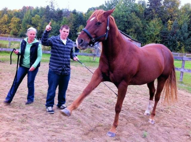 the wonder horse
